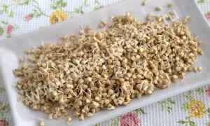 Как прорастить зеленую гречку для еды в домашних условиях