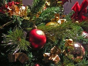 Как сохранить живую елку дома