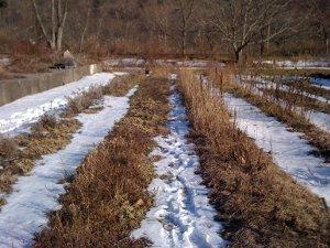 Садовые работы в марте